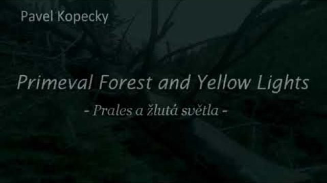 Primeval Forest and Yellow Lights